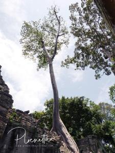 preahkhan013